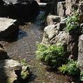 貫井神社 湧水