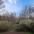 武蔵野公園 散歩道
