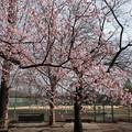 武蔵野公園 野球場