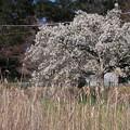 武蔵野公園 春