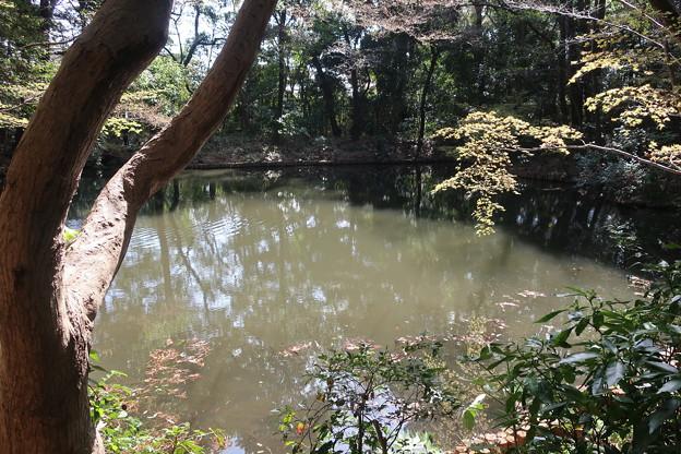 Photos: 滄浪泉園の池