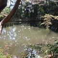 滄浪泉園の池