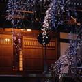 金蔵院 夜桜