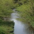 Photos: 朝の野川