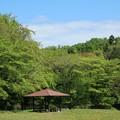 Photos: 朝の野川公園
