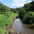 Photos: 夏の野川