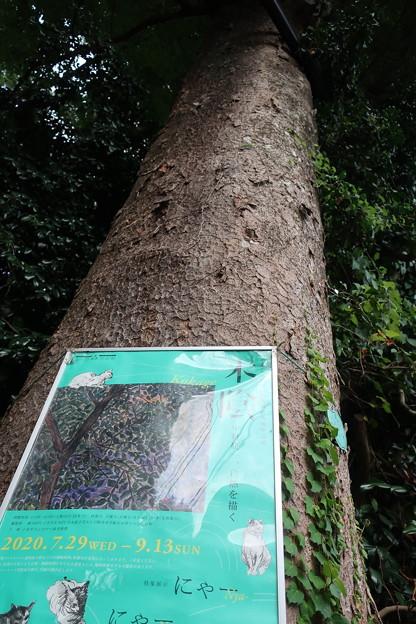 はけの森美術館3