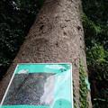 Photos: はけの森美術館3