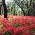 Photos: 自然観察園