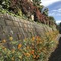 Photos: わき道