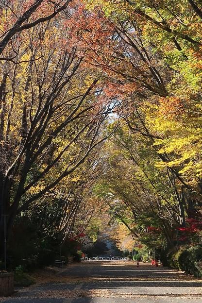 東京学芸大学 並木道