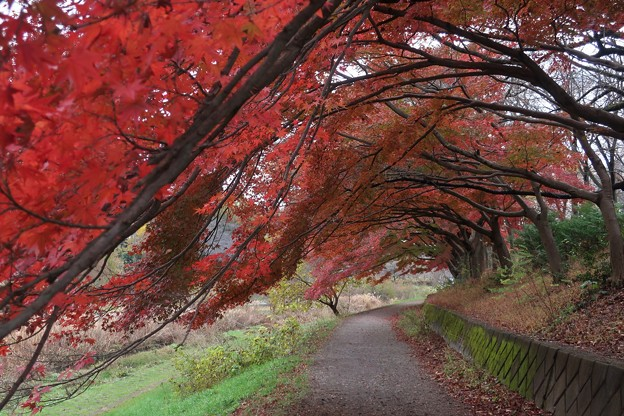 武蔵野公園 散歩