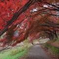 Photos: 武蔵野公園 散歩