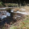 Photos: 凍る野川
