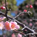 写真: 春近し~