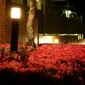 Photos: 花壇