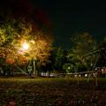 夜の公園~