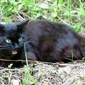 Photos: ブラックキャット♀1