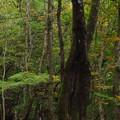 Photos: 蛇王の森