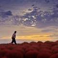 写真: 夕陽のガードマン
