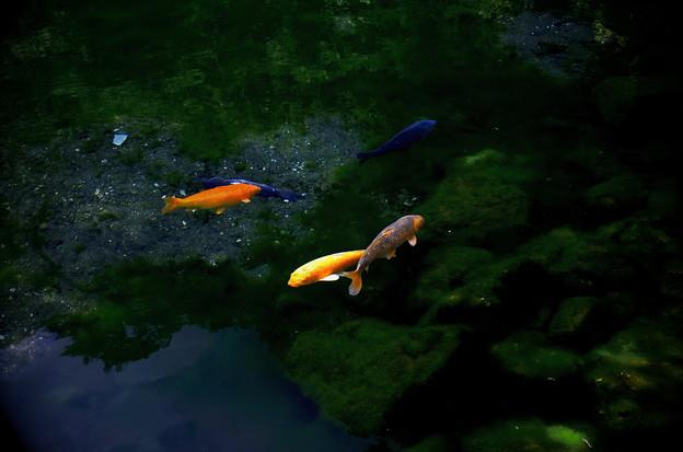 Photos: 宇宙遊泳
