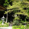 毎年見に来る日義村徳音寺の新緑