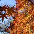 Photos: 栗林公園の紅葉