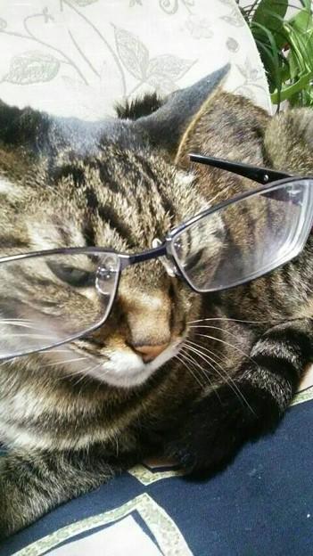 メガネをかけて、知的でお茶目な我が家のとら猫