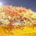 Photos: 真夜中の花桃撮影