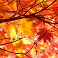 紅葉、赤、黄、オレンジのコントラスト