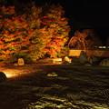 極寒の紅葉ライトアップ