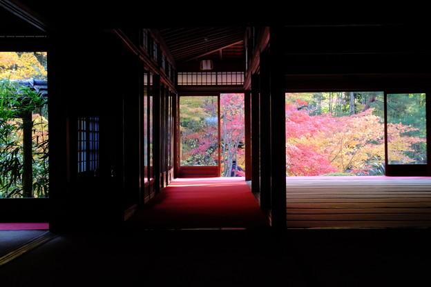 京都南禅寺天授庵の紅葉