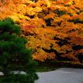 美しすぎた南禅寺天授庵の紅葉