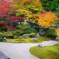 京都泉涌寺伝説の庭、紅葉