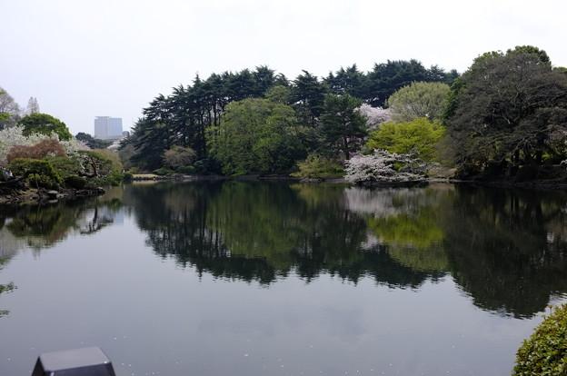 桜の時期の鏡表現