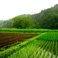 新緑の季節