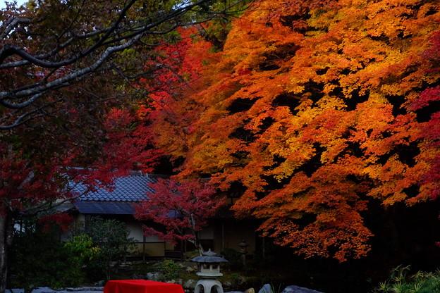 京都南禅寺のすさまじき紅葉