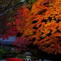 Photos: 京都南禅寺のすさまじき紅葉