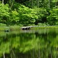 Photos: 緑の鏡