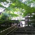 修学旅行の定番、新緑と紅葉と石庭が美しい龍安寺