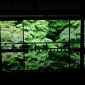 瑠璃光院の緑の奏でる世界