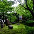 京都祇園大本山建仁寺の新緑