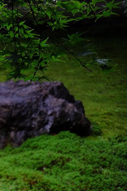 苔と紅葉が奏でる緑色の世界