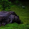 Photos: 苔と紅葉が奏でる緑色の世界