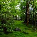 Photos: 苔の絨毯にもみじの雨が降る