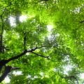 鈴虫寺の境内に続く階段は見渡す限りの緑もみじ、マイナスイオン