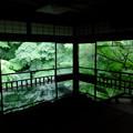 Photos: 瑠璃光院の新緑、テーブルの間その3