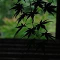 光と影のコントラスト、長野県木曽郡大桑村のお寺で思いっきり京都的表現を意識して撮影してみた