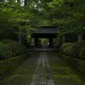 緑のもみじと苔に囲まれて厳かな雰囲気の参道