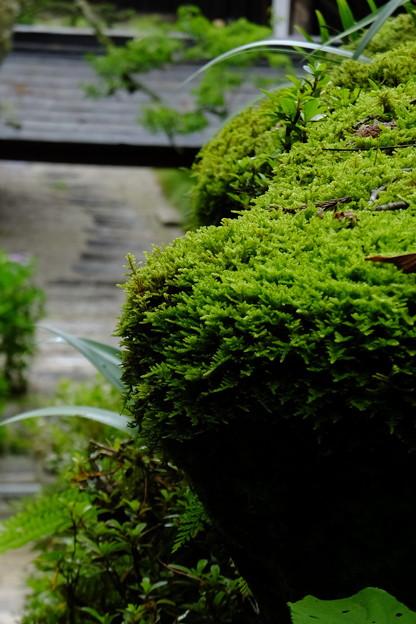 Photos: 苔は長野県木曽路でも京都でも美しい
